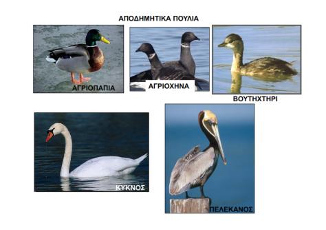 apodimitika-poulia_002