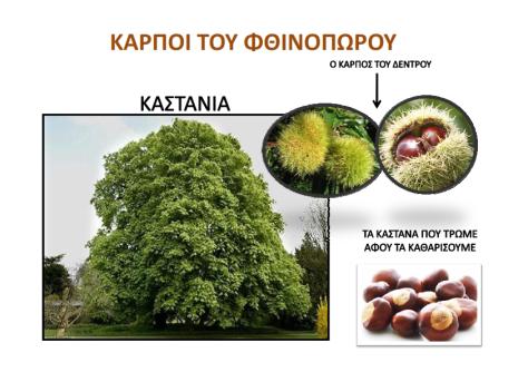 rodia-kastana_002